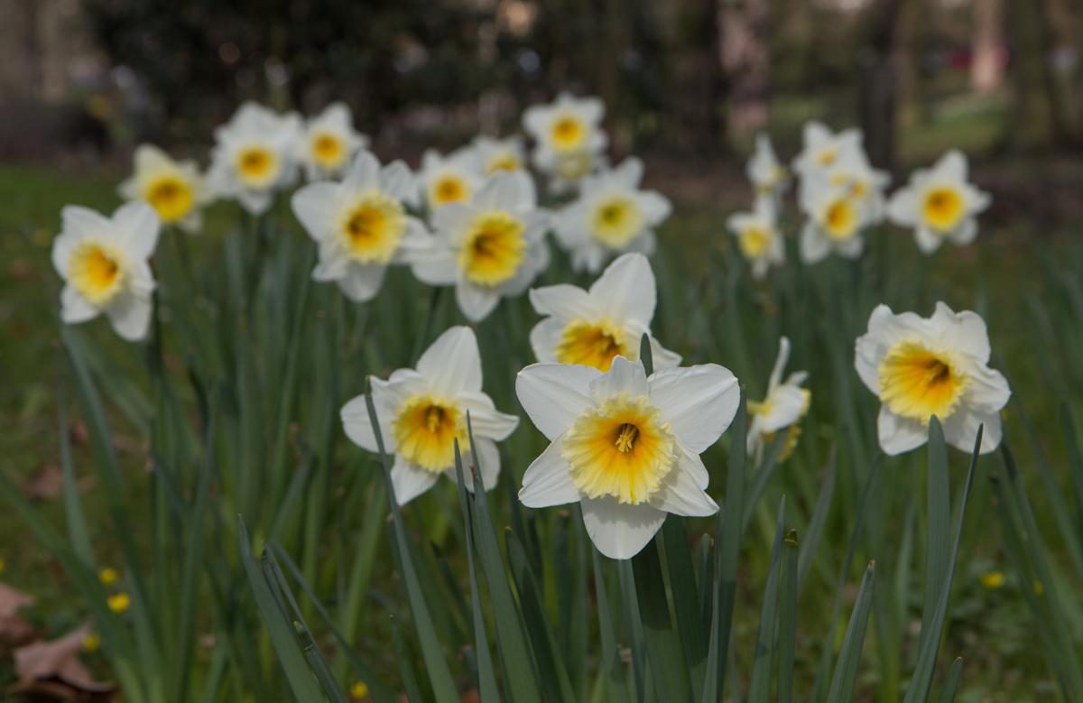 Großartig Welche Blumen Blühen Im März Sammlung Von Img_4188